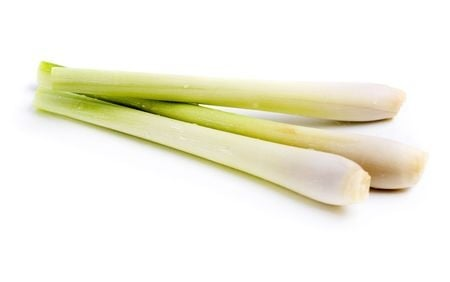 Plant - Lemongrass Essential Oil